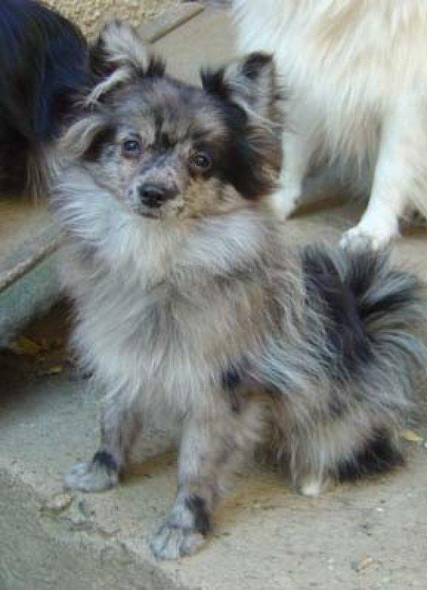 Herzallerliebster Traumhund Sonderfarbe