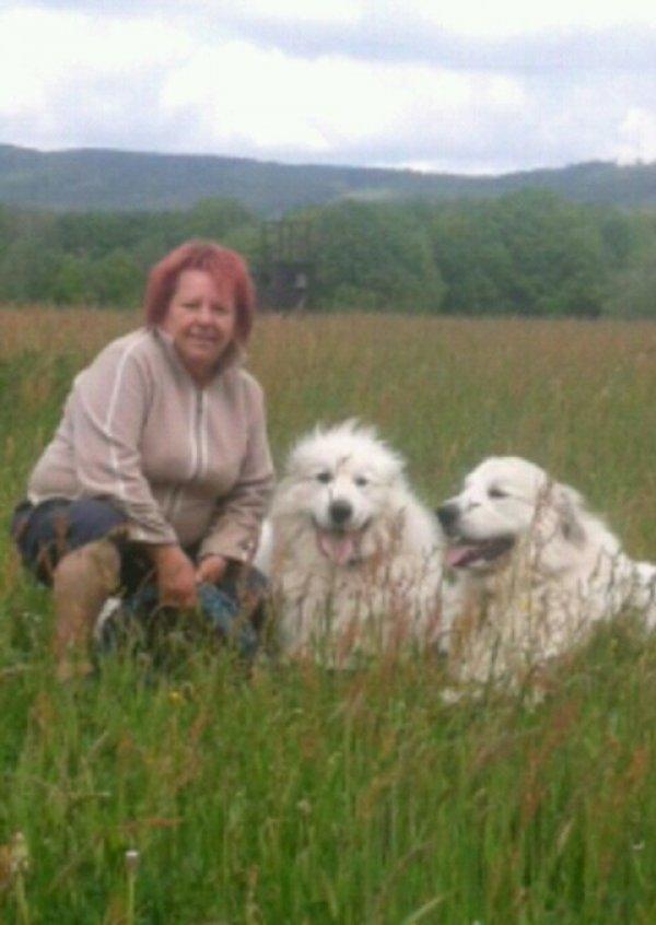 Pyrenaeenberghund-Hoppyzucht