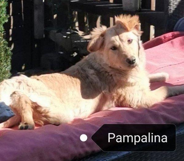 Pampalina sucht ihre Familie